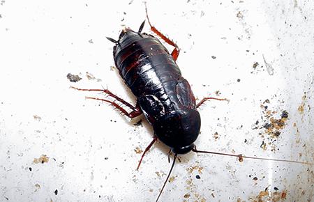 Bathroom Bugs Identification | Bathroom Design