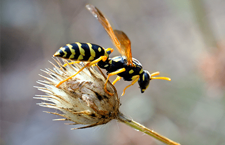 wasp on a flower outside a northern virginia home