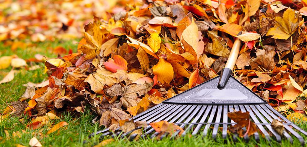 a person raking leaves away from their fairfax virginia home
