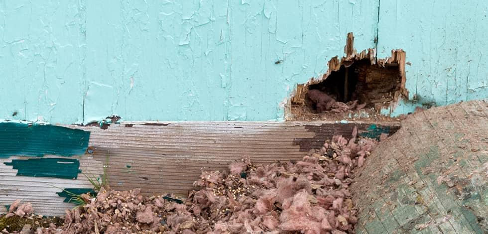 a hole in the exterior of a house in calverton maryland