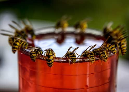 many hornets on a cup rim outside a home in towson maryland