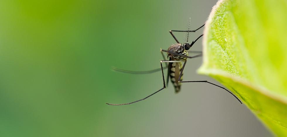 a mosquito on a plant in washington dc
