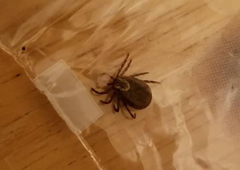 tick sealed in plastic bag