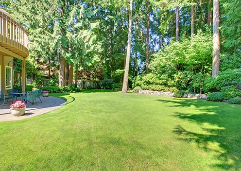 a well groomed backyard in virginia