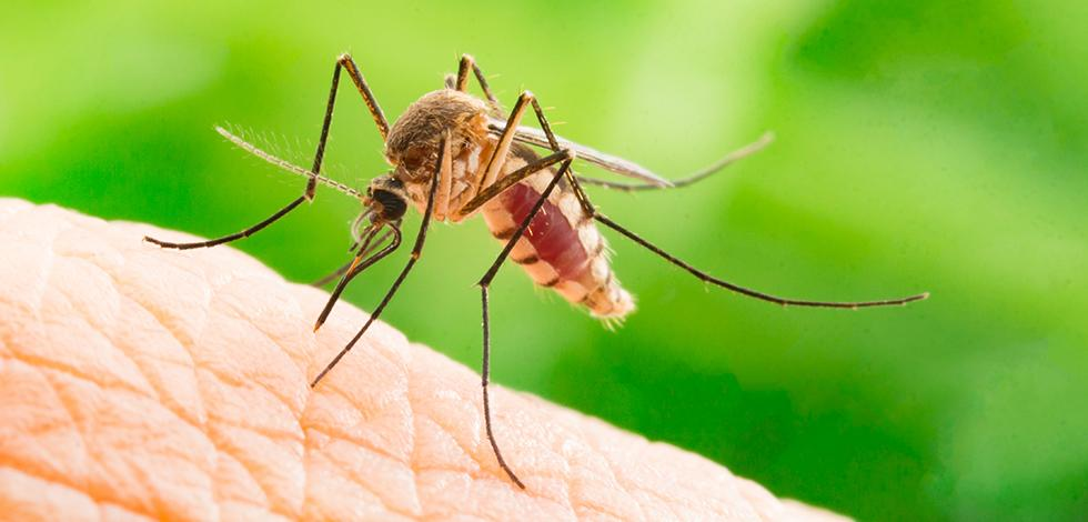 a mosquito biting a persons hand in virginia