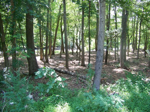scenic wooded area along Log Shoals Park trail (Credit: Upstate Forever)
