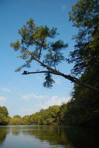 Pine Tree Rope Swing (Credit: Marc Epting)