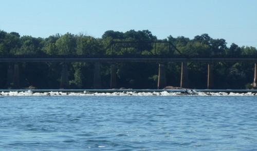Nasty looking dam located beside the Locks (Credit: P Cumalander-Frick)