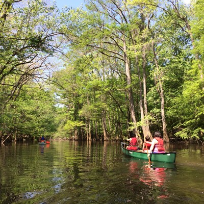 Padding Cedar Creek at Congaree National Park in spring. (Credit: Tanner Arrington)