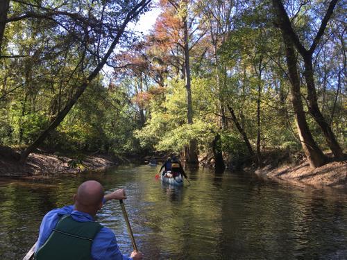 Cedar Creek near confluence with Congaree River (Credit: TA)