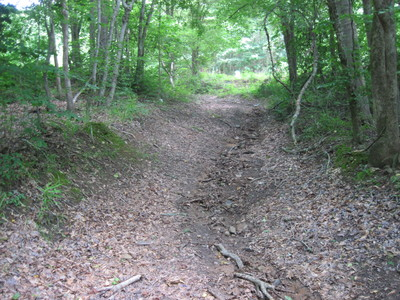 Maddox Bridge Road trail leading from roadside to Saluda River (Credit: Upstate Forever)
