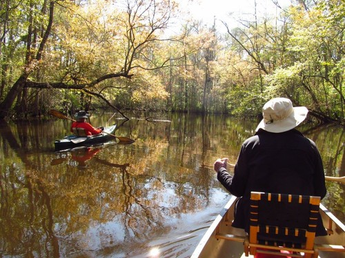 Wambaw Creek (Credit: Berkeley County Blueways)