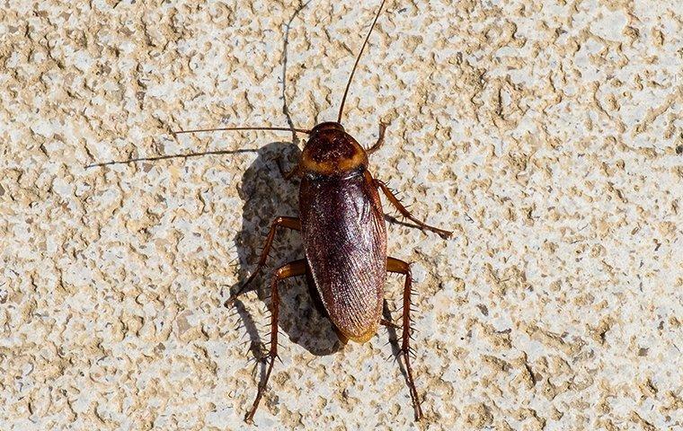 a cockroach on a patio
