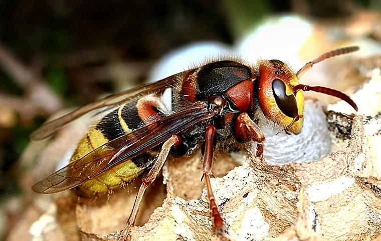 wasp building a nest