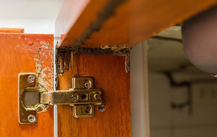 termite damage to a cabinet door