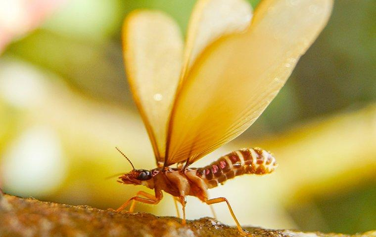 winged termite perched on a tree