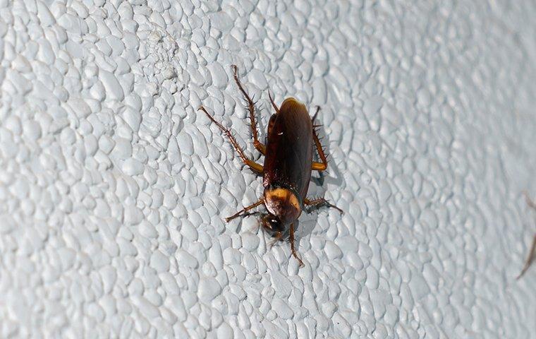 a cockroach crawling on a bathroom floor