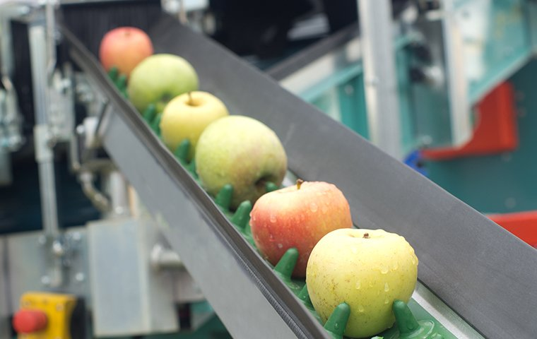 apples on a conveyor in a food processing facility