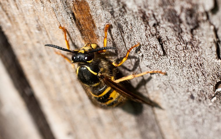 a wasp crawling on a tree