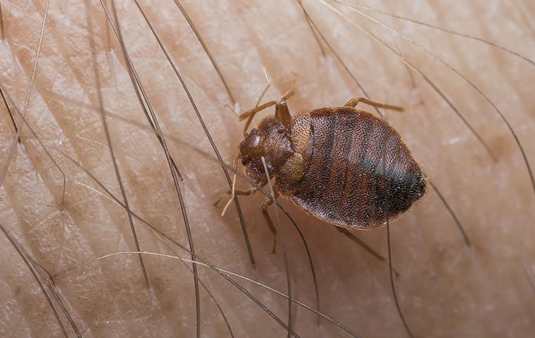 a bed bug crawling on a persons arm