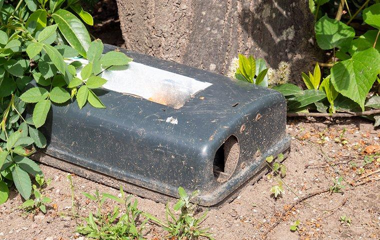 a rodent trap outside home