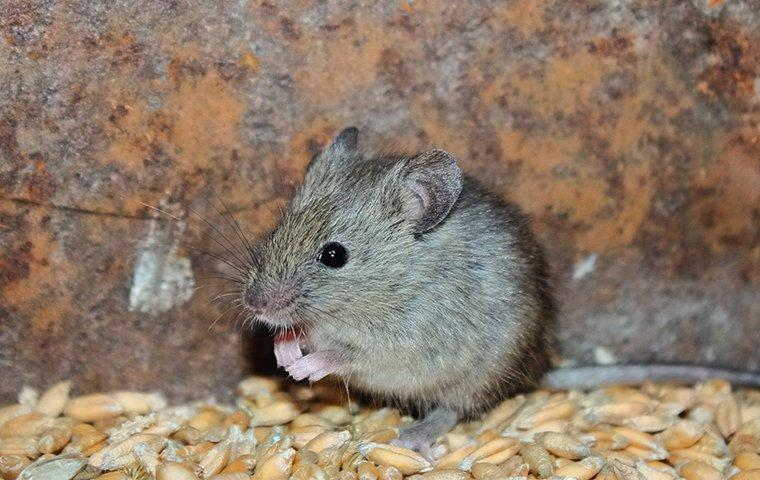 a mouse in a hole in a wall