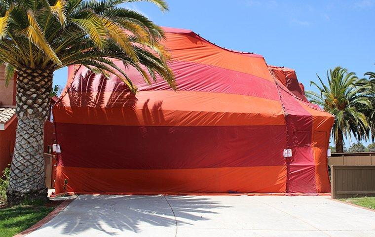 a tent covering a home in murrieta california during a professional termite fumigation treatment