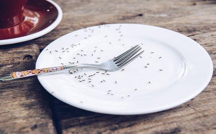 ants on plate