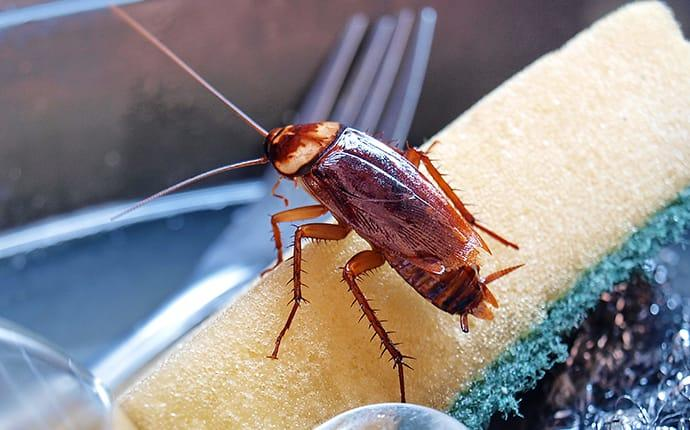 a cockroach crawling on a sponge in a kitchen sink