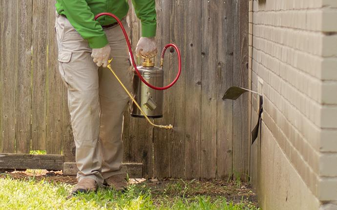 pest control technician treating the exterior of a yard
