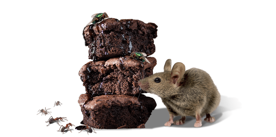 mouse next to cookies