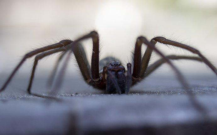 a house spider inside a home