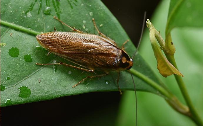 a cockroach on a leaf