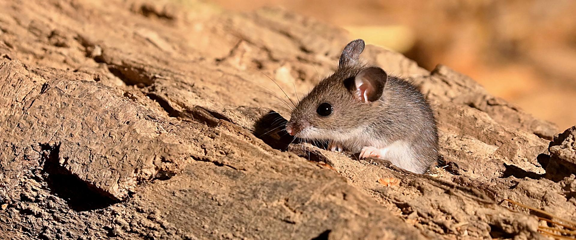 a mouse resting on a log
