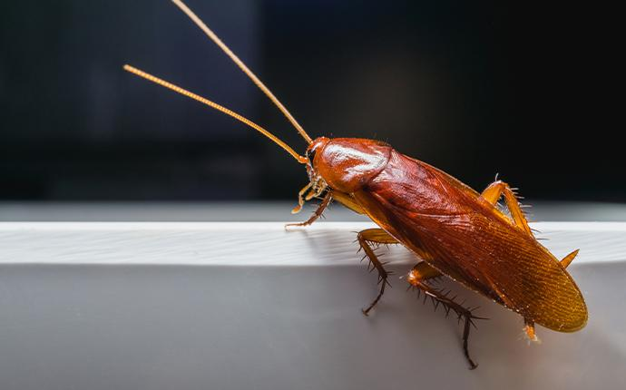 a cockroach on the edge of a counter