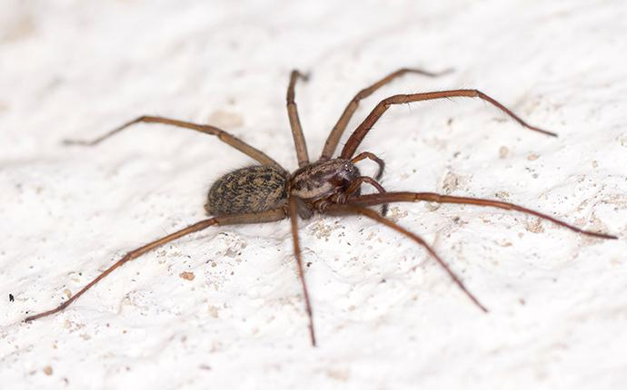a brown spider on white conrete