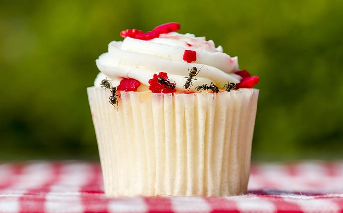 ants crawling on cupcake