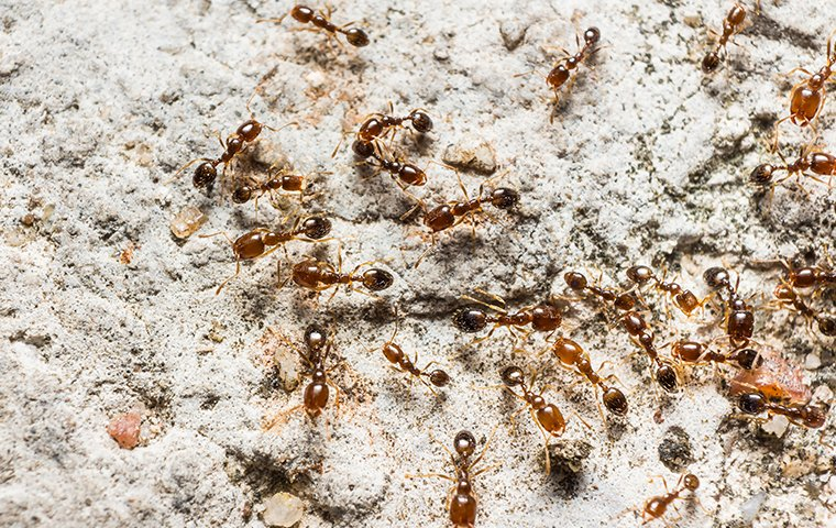 dozens of ants on the ground outside of a home in washington dc