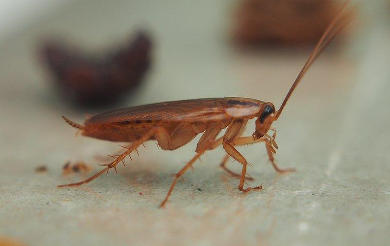 a cockroach on surface in kitchen