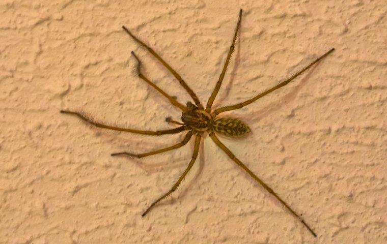 spider on wall