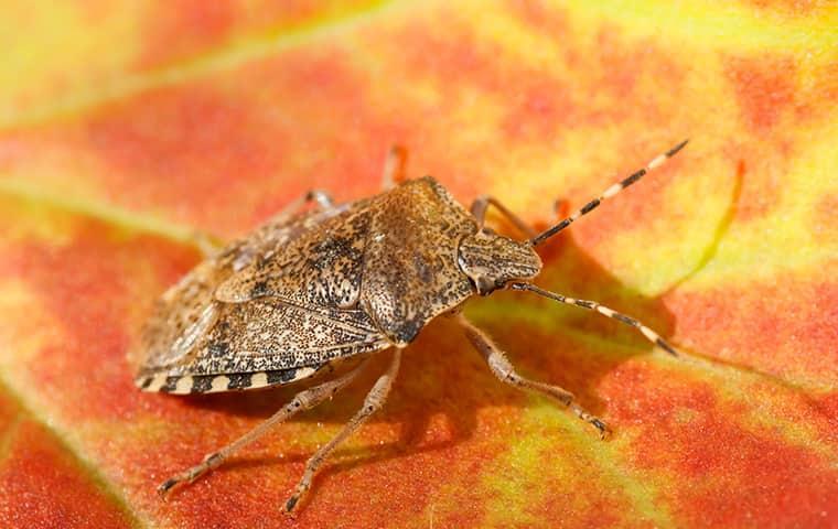 a stink bug on a leaf
