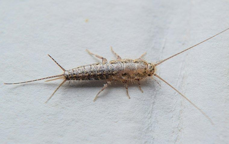 a silverfish crawling on a piece of paper in a library