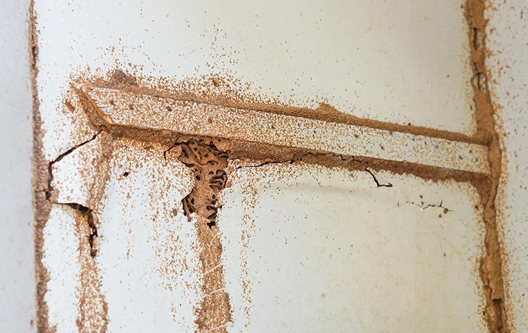 termite-damaged wood in a bethesda maryland home