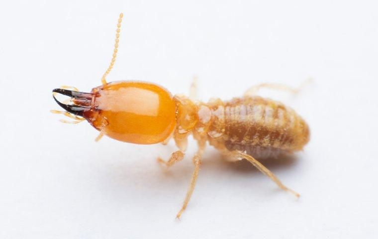 a termite on white surface