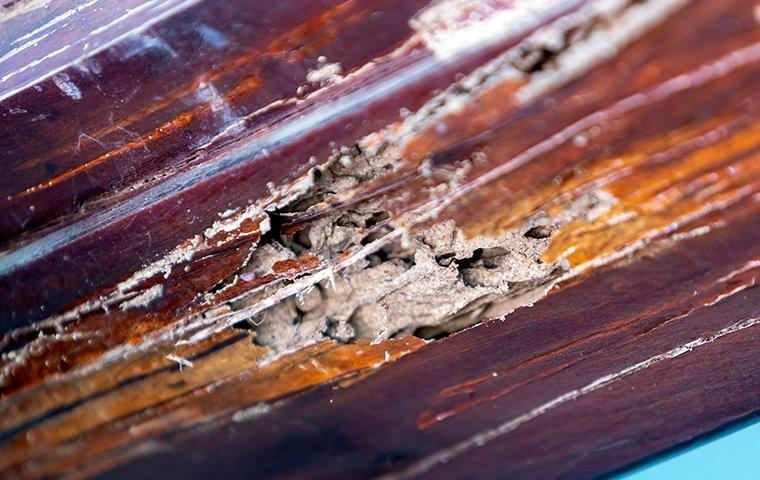 termite damage through out wooden structure