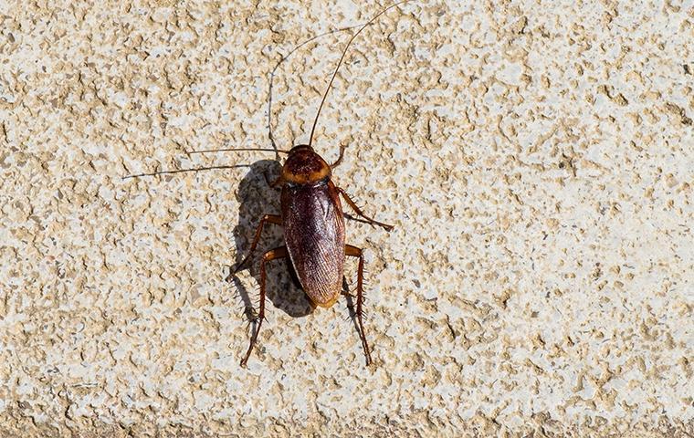 cockroach on bathroom floor