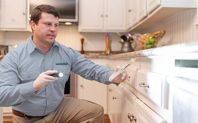 pest control treatment being performed in a washington dc kitchen