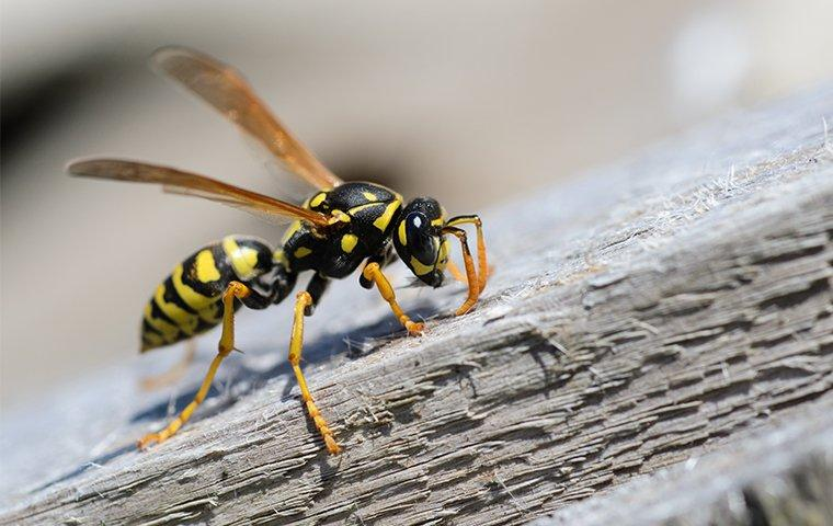 a wasp crawling on the side of a home in washington dc