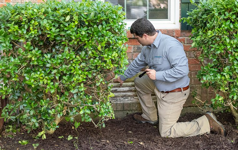 a pest technician inspecting the exterior of a house in washington dc