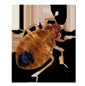 bed bug in bethesda maryland